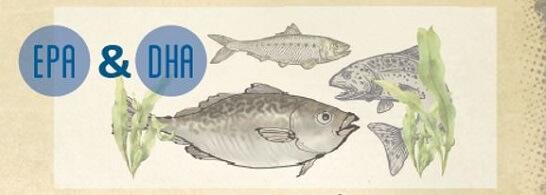 Marin omega-3 fatty acids epa dha